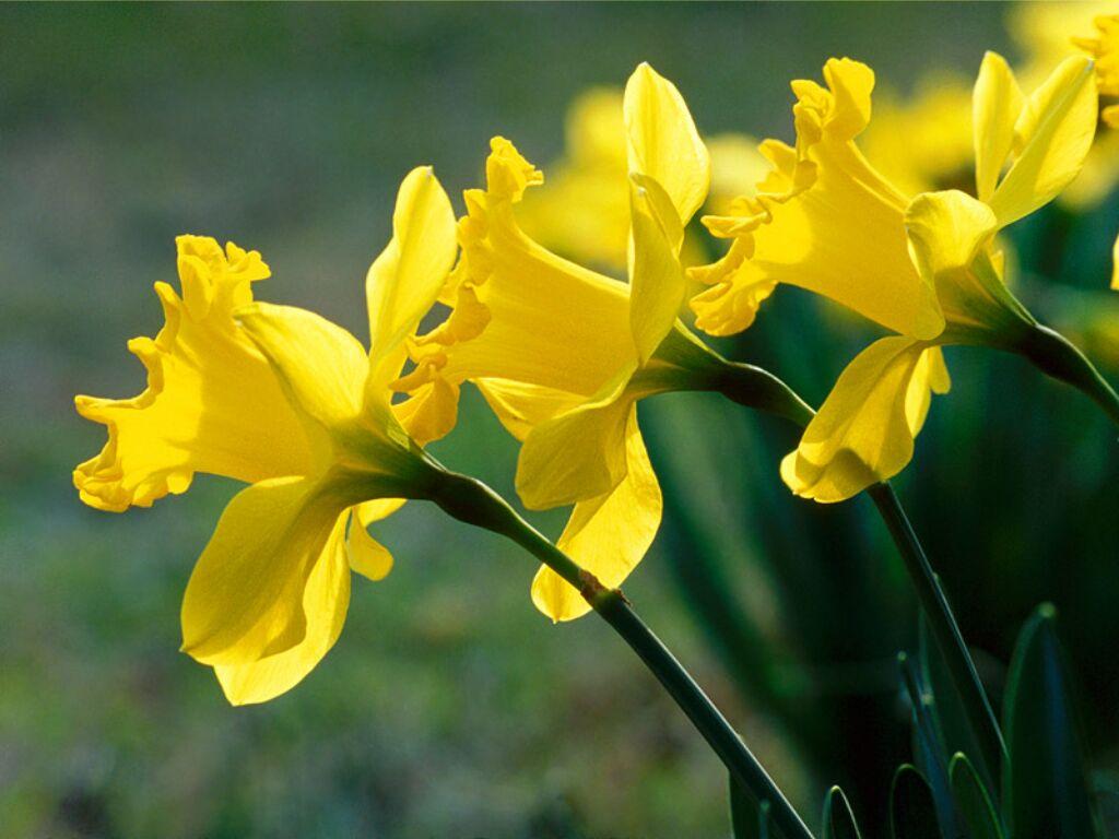 infloresc-1-martie