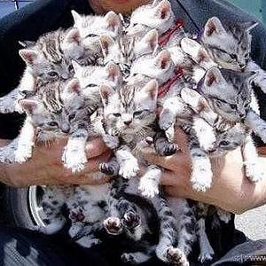 astmul-alungat-de-pisici