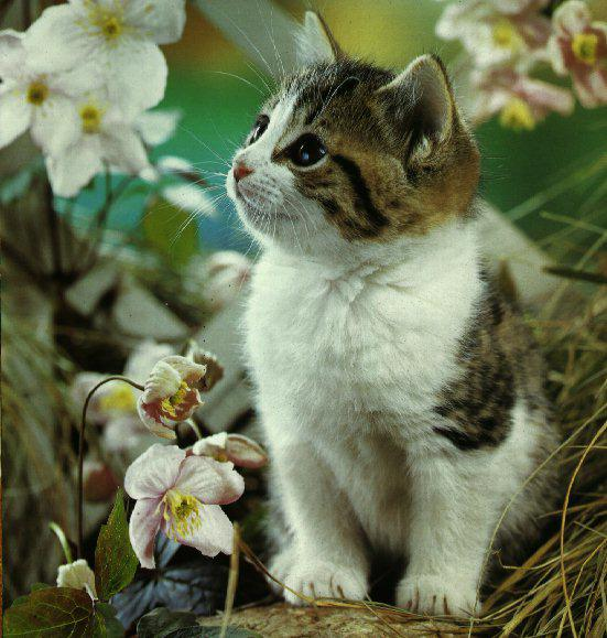 stiai-ca-legatura-dintre-oameni-si-pisici-dateaza-de-peste-9500-de-ani