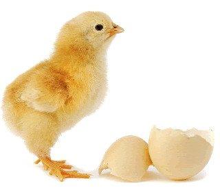 viata-din-ou