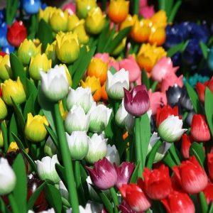 nume-care-se-sarbatoresc-de-florii