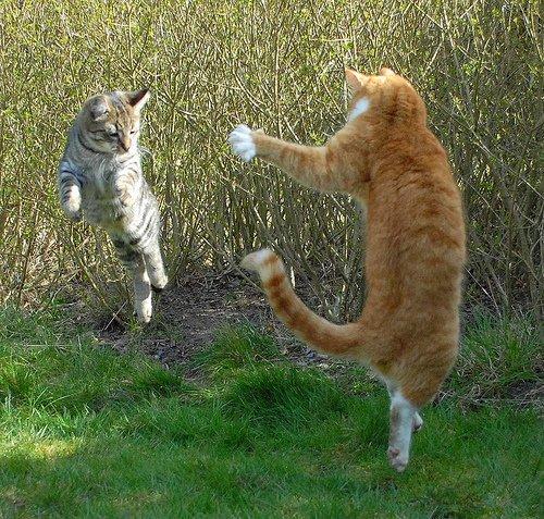 poze-haioase-poze-amuzante-pisici-animale-gravitatie
