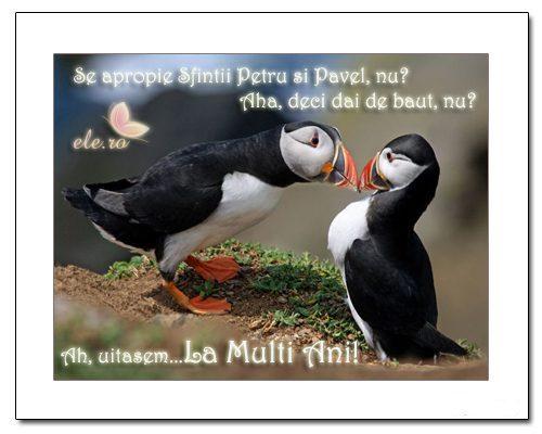 mesaje de petru si pavel